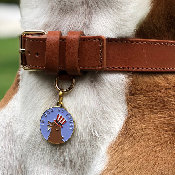 Pet ID tag hanging on a collar worn by a brown and white dog. Made of gold plated brass and blue enamel designed with a dog dressed like Uncle Sam on a quarter that reads 'In dog we trust'.