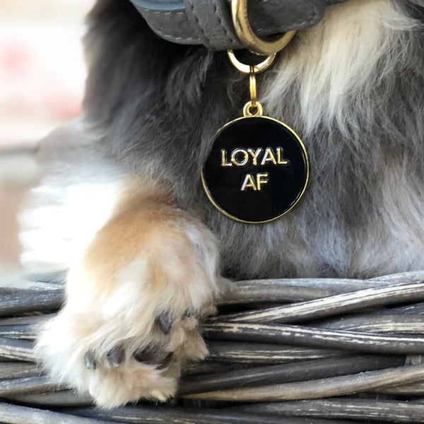 Pet ID tag hanging on a collar worn by a black and blonde dog. It is made of gold plated brass and black enamel that read 'Loyal AF'.