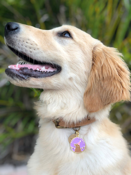 Pet ID tag hanging on a collar worn by a blonde dog. It is made of gold plated brass and purple enamel that read 'Party Animal' and depicts a dog wearing a party hat.