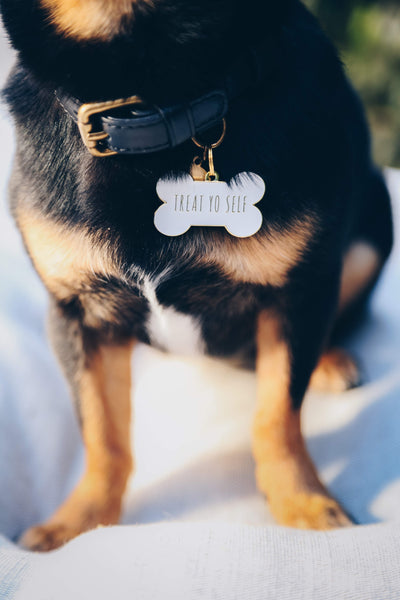Pet ID tag hanging on a collar worn by a brown and white dog. It is made of gold plated brass and white enamel that is shaped like a bone and reads 'Treat Yo Self'.