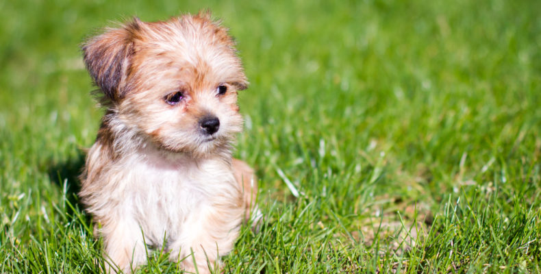 10 Insanely Cute Puppies To Brighten Up Your Day