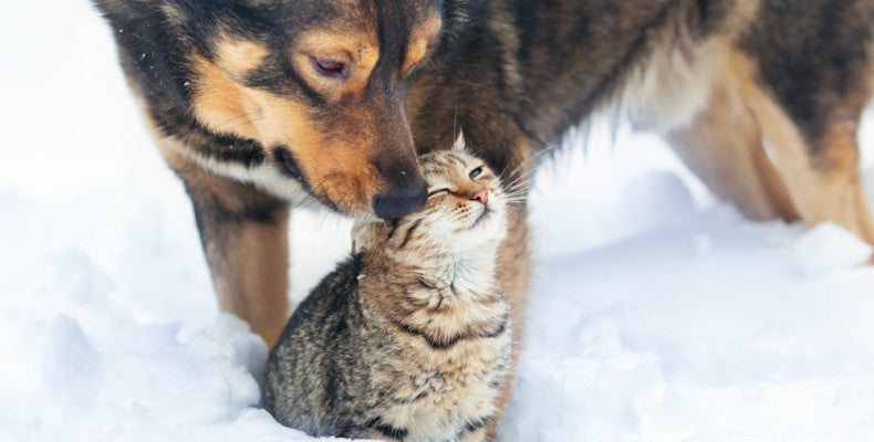 Keeping Our Pets Safe: Protecting Our Pets During The Winter