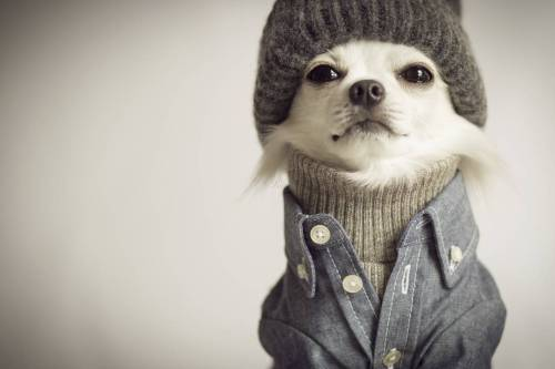 10 Pets that Were Hipsters Before It Was Cool