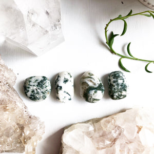Tree Agate Tumbled Stone Crystals
