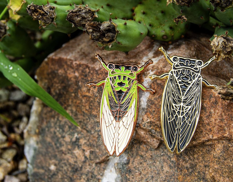 two cicada pins on a rock, near prickly pear cactuses.