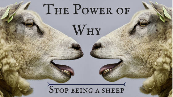 The Power of Why: Stop Being A Sheep
