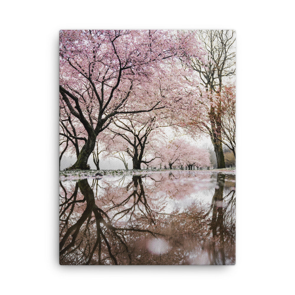 River of Cherry Trees canvas print