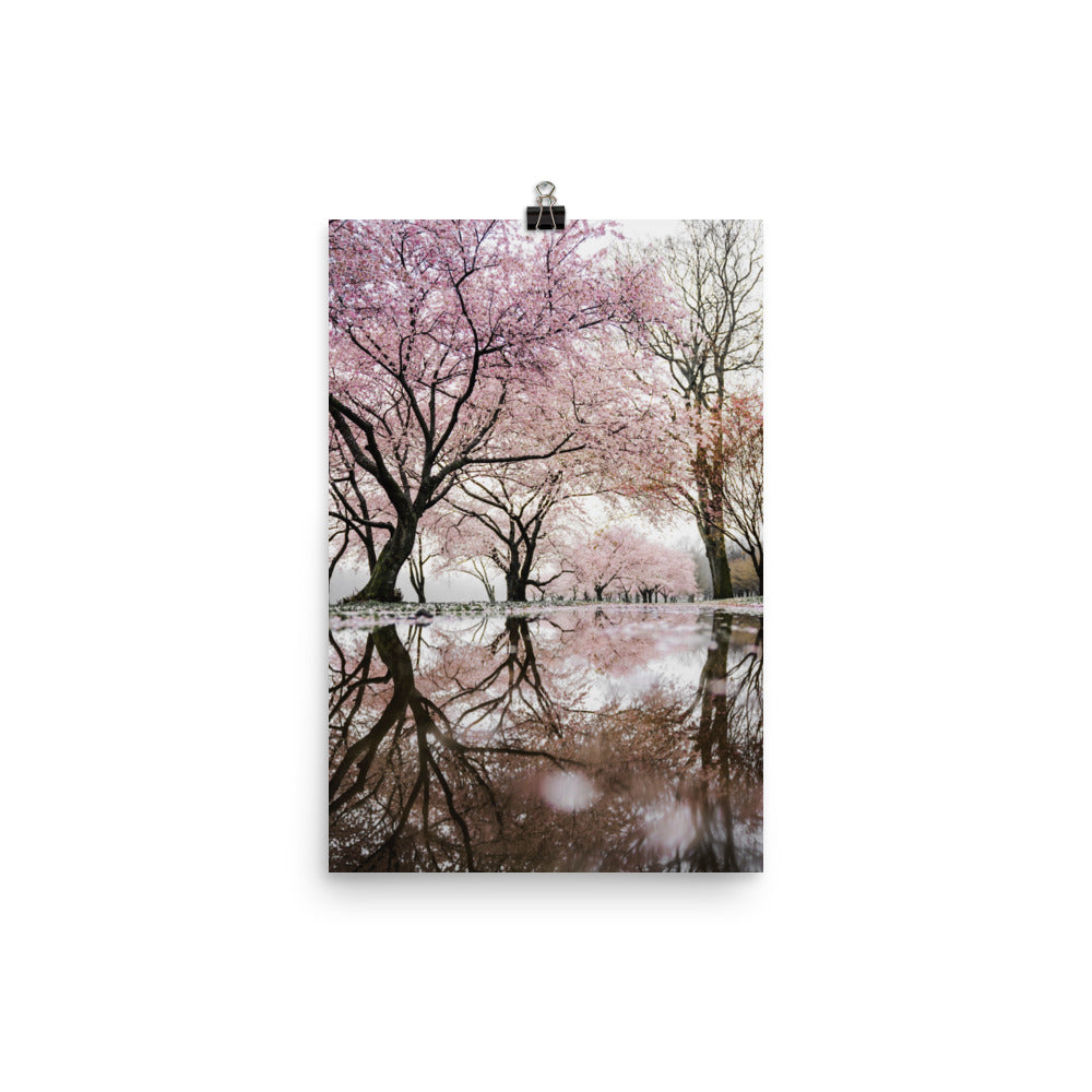 River of Cherry Trees poster