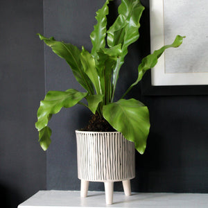 PENN | Plant Pot | Vertical Lines Black & Neutral Ceramic Plant Pot Plant Pot A House Like This