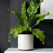 LYKKE | Plant Pot | Speckled White Ceramic Plant Pot Plant Pot A House Like This