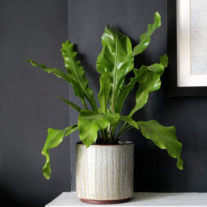 TERRA | Plant Pot | Taupe & Neutral Ceramic Plant Pot Plant Pot A House Like This