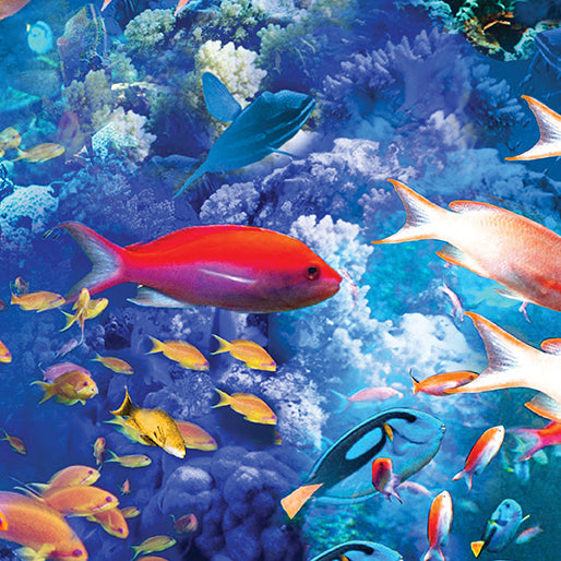 Coral Reef Multi Fish Bright