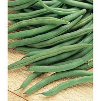 Blue Lake Bush Bean 274, Packed in Resealable Foil Packaging, Heirloom, NON GMO-Starting Gardens