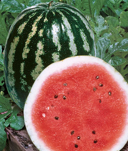 Crimson Sweet Watermelon, 1/2 Ounce Pack, 250-300 Seeds, NON GMO Watermelon