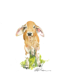 Baby Brahman Watercolor Print