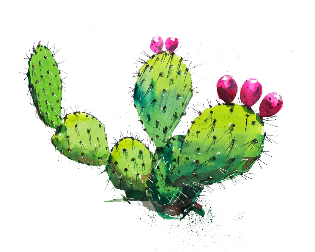 Prickly Pear 3 Watercolor Print