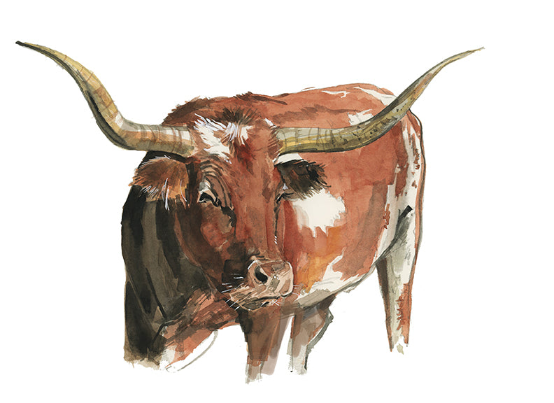 Longhorn Watercolor Print