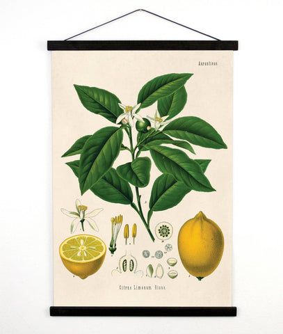 Vintage Botanical Citrus Lemon Canvas Wall Hanging Chart