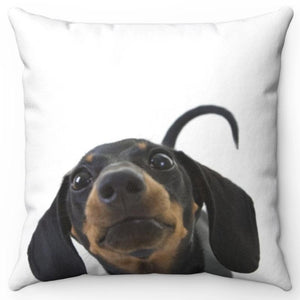 "Curious Dachshund Snoot 16"" Or 18"" Square Throw Pillow"