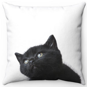 "Curious Black Kitten 16"" x 16"" Square Throw Pillow"