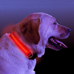 LED Light Up Dog Collar - Puppy Loves Fashion