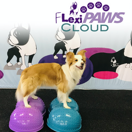 The FlexiPAWS Cloud by FitPaws