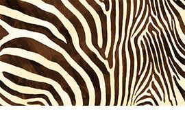 Safari Zebra Brown 22843A