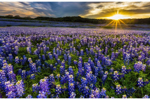 "Sun Up To Sun Down 43"" x 28"" Blue Bonnet Digital Panel P4690-647 from Hoffman by the panel"