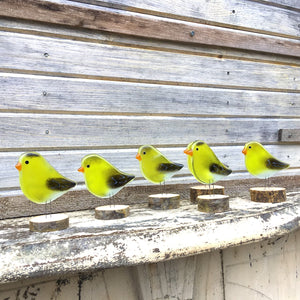 North American Goldfinches by The Glass Bakery