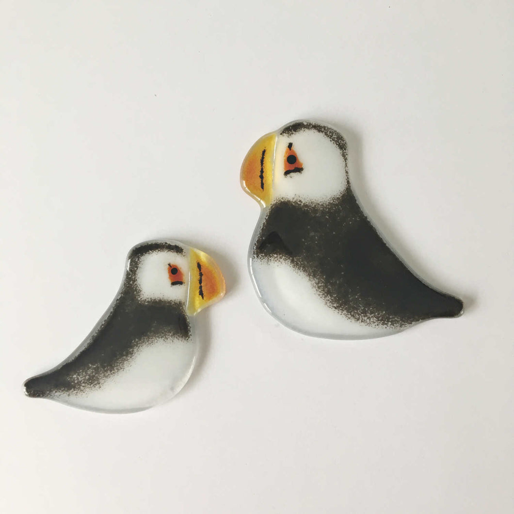 Black and White Glass Puffin chick and adult bird