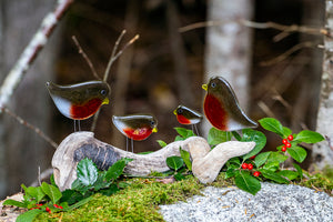 A greetings card featuring a photo of a family of Glass Robins on a mossy rock.
