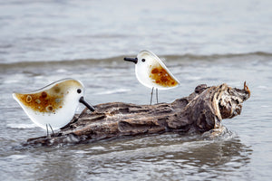 Greetings Card featuring a large and small sandpiper on a piece of driftwood on the edge of the beach