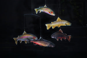 A rainbow trout, brown trout, cutthroat, brook, and bull trout swim about where ever you hang this beautiful trout mobile. The Trout Mobile Kit provides entertainment, eduction, and inspires conservation of our trout and habitat. Fly fishing for trout!