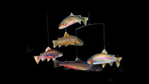 TroutMobile features five colorful trout suspended in air. Hand the Trout Mobile wherever you want and feel the calming effect of trout swimming.