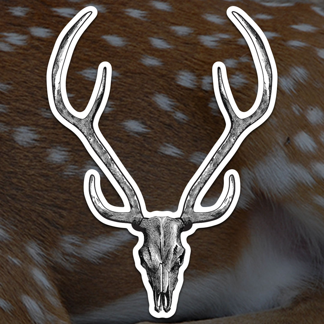 Axis Deer Skull Sticker