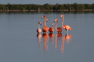 Discover the flamingos for the sunrise with Diego