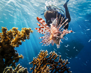 Enjoy one of the most beautiful coral reefs in the world with Gabriel