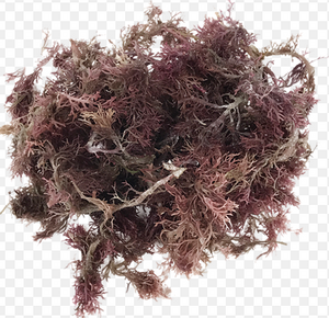 Honduras Sea Moss (Wildcrafted) - All Naturell Healing