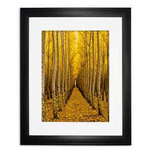 Prints - Fall in Oregon