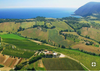 The Ides of Marche - The Hidden Gem of Italian Wine