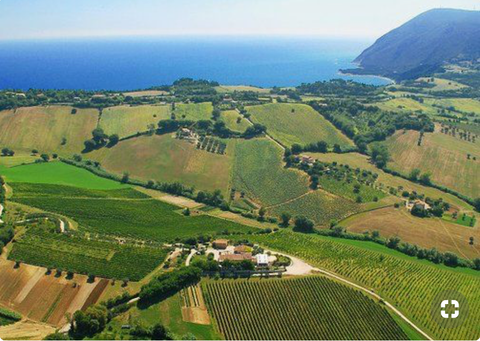 Aerial view of Marche vineyards and distant coastline in Italy