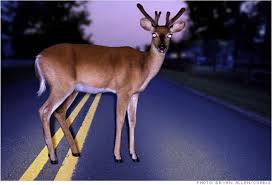 Ever Wondered Why a Deer Freezes in the Headlights?