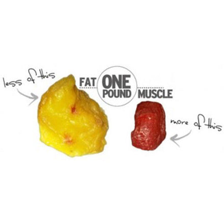 Does Muscle or Fat Weigh More?