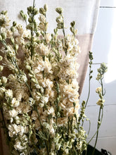 Dried White Larkspur Bundle