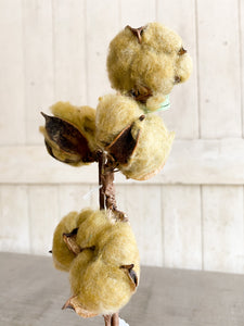 Harvest Cotton Stem