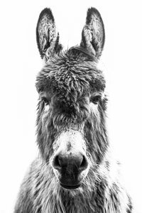 Up Close and Personal Donkey