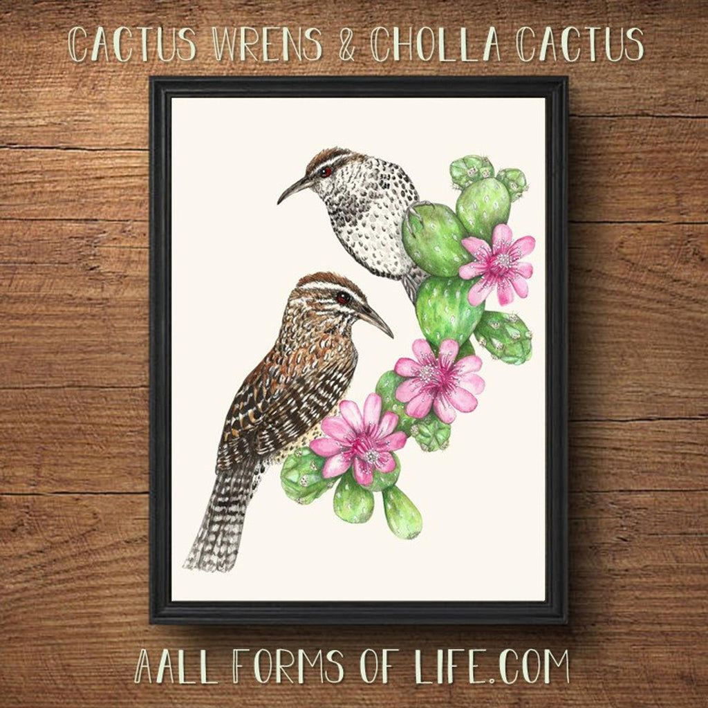 (c) Aall Forms of Life Cactus Wren and Cholla