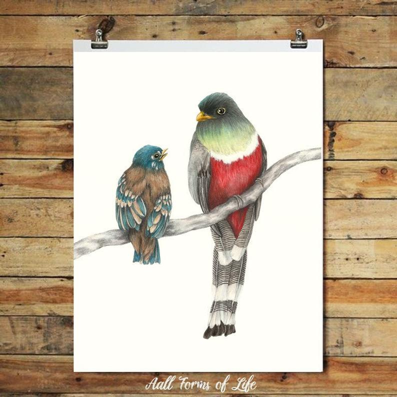 "(c) Aall Forms of Life ""Elegant Trogon & Fledgling"" Print"