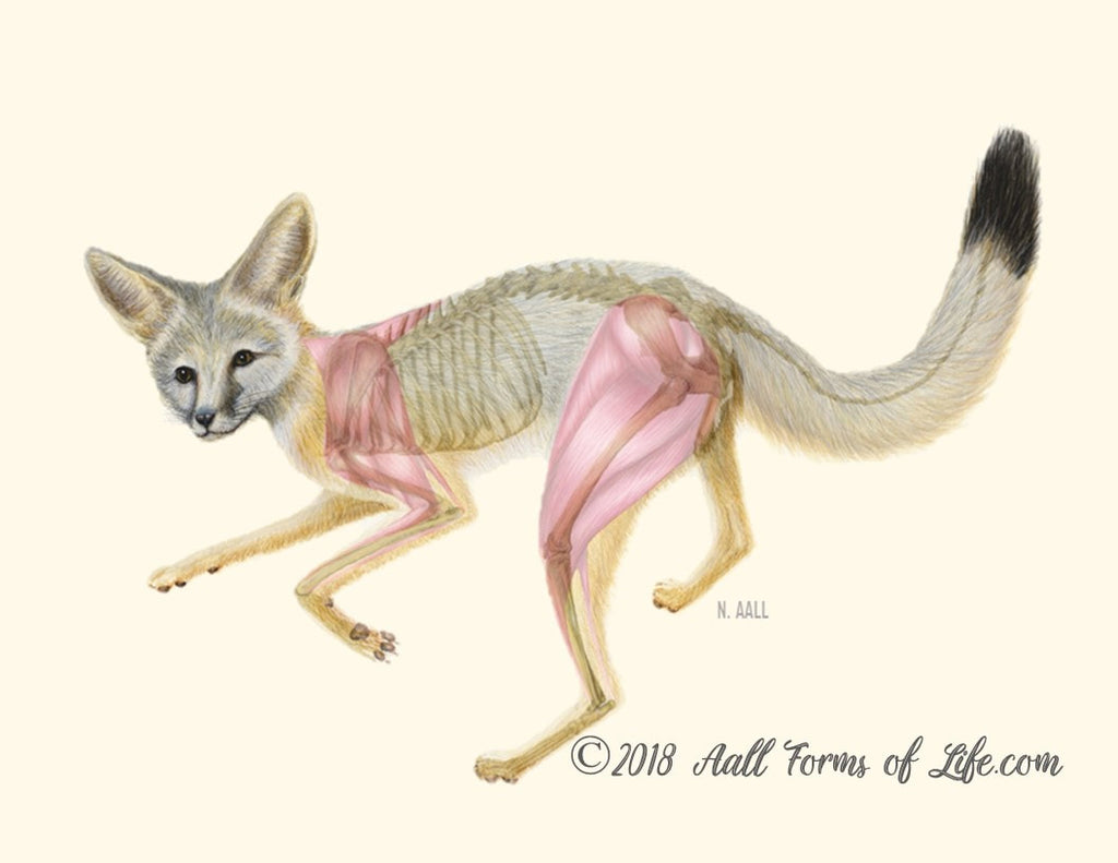 (c) All Forms of Life Kit Fox Composite Print