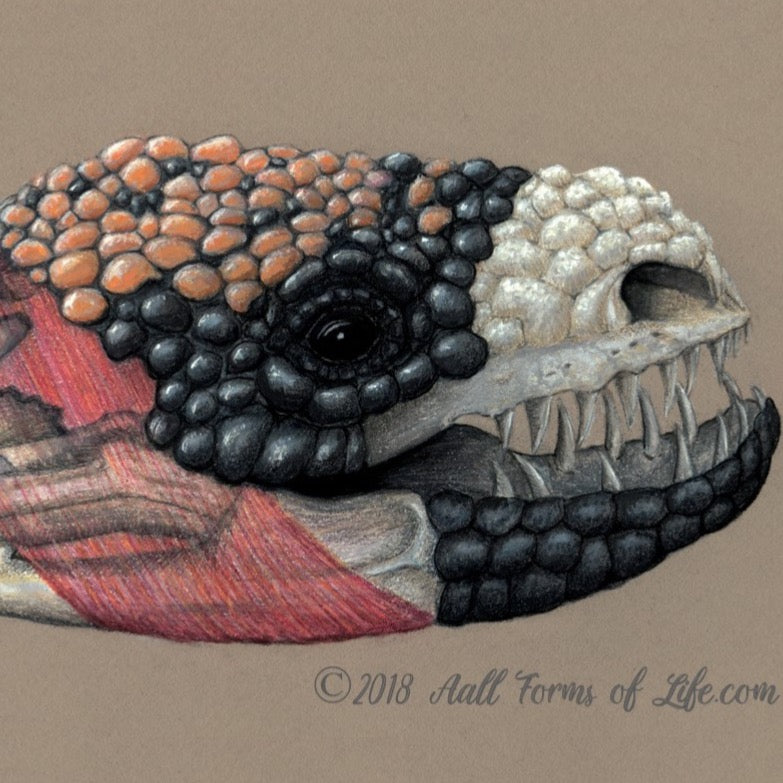 "(c)  Aall Forms of Life ""Gila Monster Composite"""